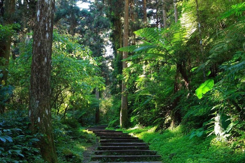 河南省首条国家森林步道国庆开放 尽览王屋太行好风光