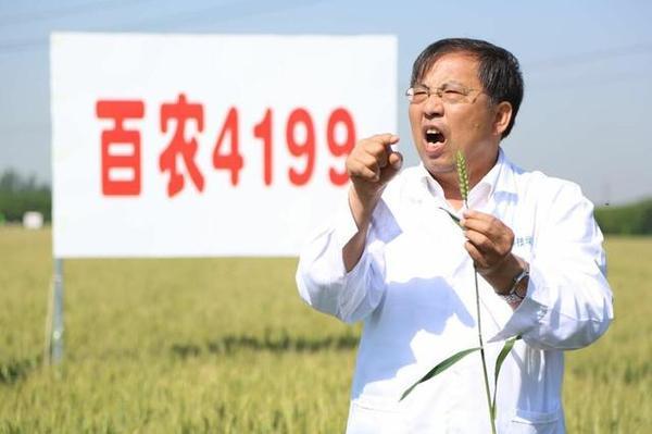 """""""豫""""见中国 茹振刚:从国人粮仓到世界餐桌 一粒""""麦子""""安天下"""