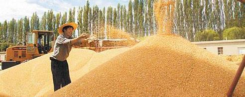 国家发改委、国家粮储局等8部门印发通知 部署秋粮收购工作