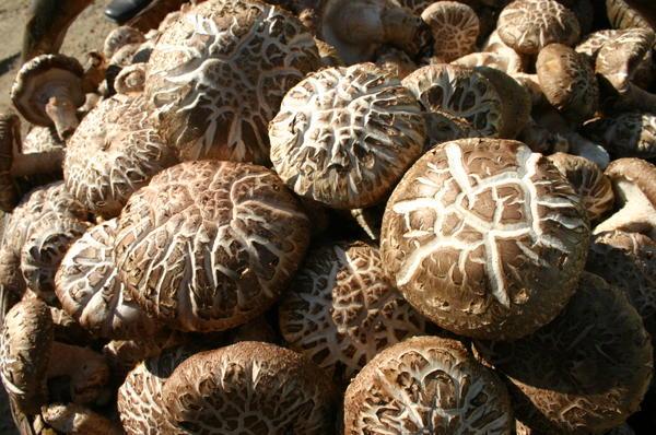 """西峡香菇:14年出口增长近400倍 一个""""香菇""""的国际范"""