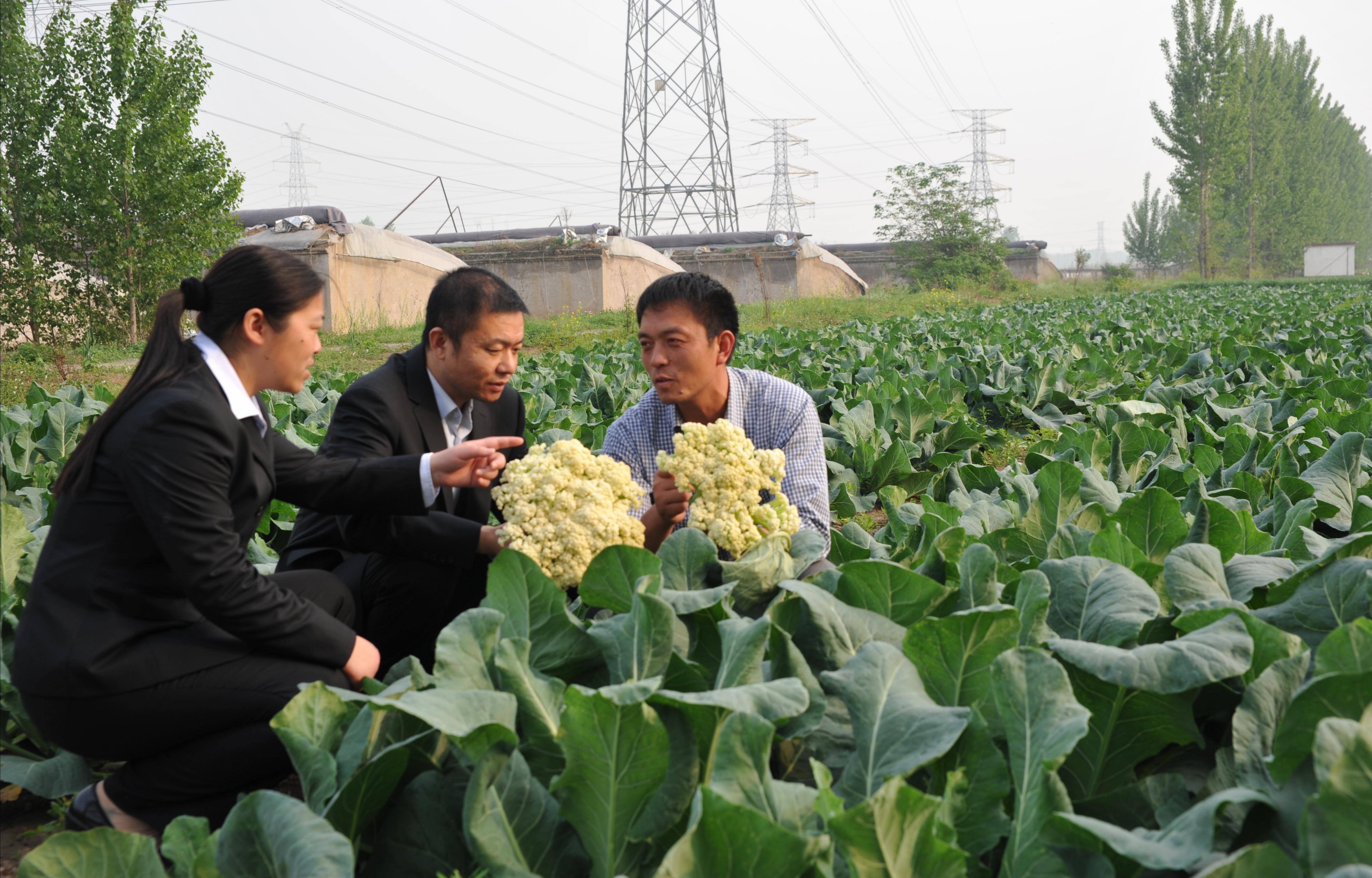 河南农信社牵手阿里云 把普惠金融辐射到广袤农村