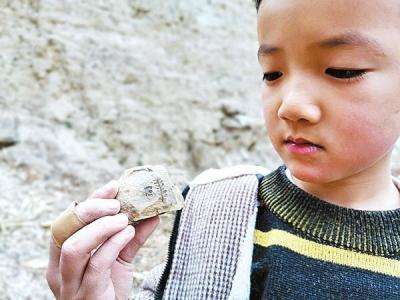 登封男童孙嘉树邂逅3亿年前植物化石