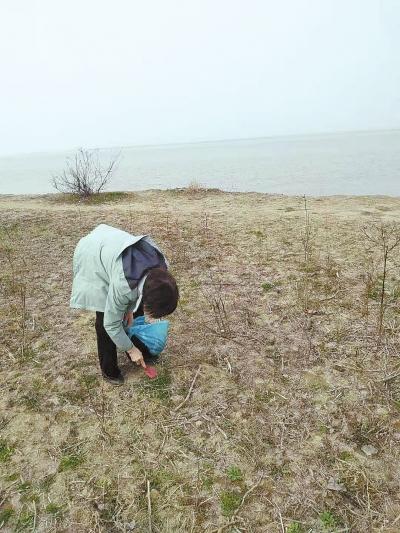 春天,郑州市民喜欢吃野菜 黄河滩里的野菜能挖吗?
